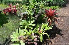 bromeliad garden - Bing images