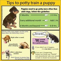 Dog Names Discover Tips & Hacks For Your Dog Potty Training? Take a look at these Positive Potty Training Methods to train your pup and Tips & Hacks For Your Dog .that you wish you knew a long time ago on Frugal Coupon Living. Puppy Training Tips, Training Your Dog, Dog Crate Training, Potty Training Puppies, Puppy Crate Training Schedule, Puppy Feeding Schedule, Rottweiler Training, Service Dog Training, Agility Training