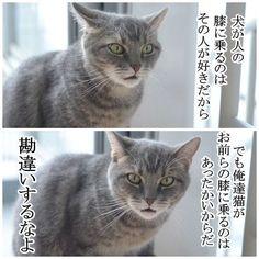 涼しくなってきたし、そろそろ猫が膝に乗ってくる時期なのでうちの猫の名言置いときますね。 pic.twitter.com/HGdo62yB0z