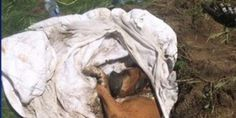 petition: Demand Maximum Sentence for Animal Abuser Who Beat a Dog and Buried It Alive in the Monteregie, Quebec, Canada