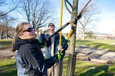 Tree Pruning...when is it time to trim?  Great information.