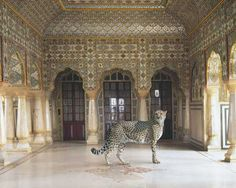 22 Stunning Photos of Animals in Exquisite Indian Palaces 28 - https://www.facebook.com/diplyofficial