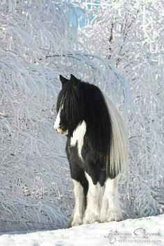 Beautiful horse standing in winter wonder, icy snow covered trees. Breathtaking horse and nature.