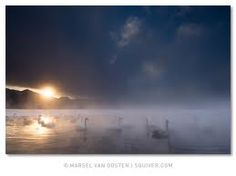 marsel van oosten Swan Lake, Wildlife, Photos, Van, Clouds, Celestial, Explore, Outdoor, Beautiful