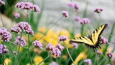 Flowers & Plants That Attract Butterflies