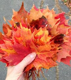 Plan Ahead to See Fall Foliage in New England in 2016: Step 7: Make the Most of Fall Days in New England