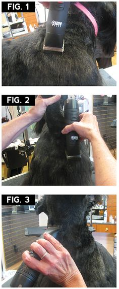 Scottie Pet Trim | Groomer to Groomer – Pet Grooming News, Stories, and Videos