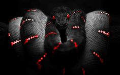 serpent  sauvage | Similar Hd wild snake wallpapers