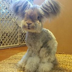 This is rabbit!! not dog!!!