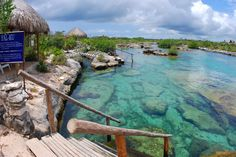 One of the best snorkeling spots Tons of fish Akumal, Mexico | 5612 - Akumal Bay & Yal Ku Lagoon