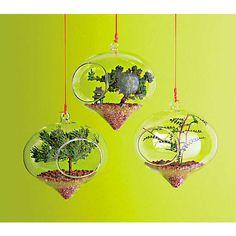 Hindu-Inspired Planters : Plants of Gods