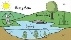 different kinds of ecosystems - YouTube