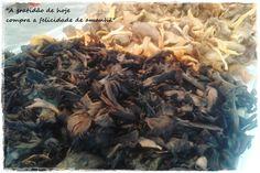 Me, you & pets too: Alimento de Hoje #7 - Cogumelos
