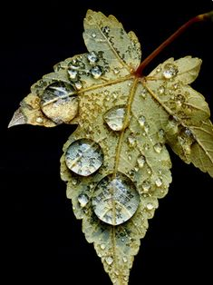 Close Up Photography, Water Photography, Macro Photography, Amazing Photography, Levitation Photography, Abstract Photography, Dew Drops, Rain Drops, Flora Und Fauna