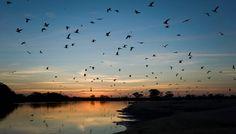 Entardecer na RPPN SESC Pantanal. Foto: Haroldo Palo Jr./SESC Pantanal
