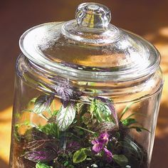 RAINFOREST IN A JAR:      Glass container with a top and an opening wide enough to fit your hand into     Pea gravel or aquarium gravel     Activated charcoal (available at gardening stores)     Potting soil mix     Selection of small houseplants (ours included a prayer plant, a button fern, a Persian shield, an aluminum plant, and a miniature African violet)     Spray bottle