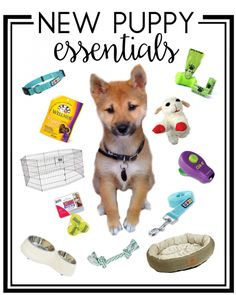 Make your life as a new puppy parent easier with these essentials - everyday items, training aids, toys and more! Welcome your cute new puppy home with everything they'll need!