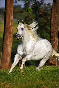 #horse galloping, look at the power!!