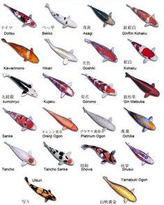 Toutes les koi (Cyprinus carpio) sont issus d'une sélection relativement récente. Par exemple, la lignée Kohaku est stabilisée quedepuis les années 1930. Le tableau, ci-dessous, retrace les mutations à l'origine des variétés modernes. Le minimumà savoir sur les variétés des Koi :  ...
