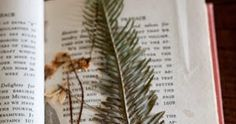 Texas artist Lauren Lachance's pressed botanicals are true works of art.     I enjoyed the coincidence of spotting Lauren's work — jus...