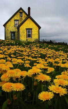 paraíso ... #amarelo .... #yellow