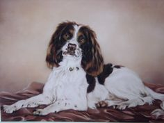 commissioned portrait; 'Max' (Maximilian Galleydown).  pastel 28 x 22 inches. sold.