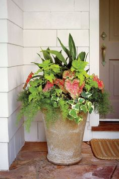 Container Gardening Ideas Shade pot: 'Wasabi' coleus Cast-iron plant 'Pink Beauty' caladium Variegated Algerian ivy Asparagus fern - This shade-loving combo adds color to any entry Porch Plants, Outdoor Plants, Outdoor Flower Pots, House Plants, Outdoor Spaces, Cast Iron Plant, Full Sun Plants, Full Sun Container Plants, Full Shade Plants