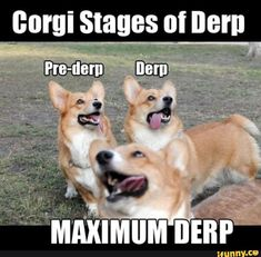Image result for corgi ship
