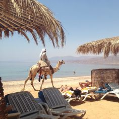 """See 146 photos and 8 tips from 240 visitors to Hilton Taba & Nelson Village Resort. """"Beach area is rocky and has a reef for snorkeling. The water is. Sofitel Hotel, Egyptians, Snorkeling, My World, Four Square, Places Ive Been, Camel, Beach, Animals"""