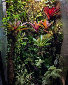 Garden Terrarium, Terrariums, Gecko Vivarium, Whites Tree Frog, Classroom Pets, Animal Room, Tree Frogs, One Year Old, Habitats