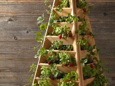 Fontaines à fraises : Rendements records sur petits espaces Potager Palettes, Spiral Garden, Strawberry Planters, Building A Pergola, Hanging Pots, Survival Life, Gardening Gloves, Sustainable Living, Horticulture