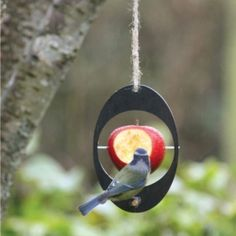 Eco Apple Feeder to feed the birds in your garden A simple and elegant way of recycling unwanted food for the birds in your area Made from recycled Small Garden Birds, Metal Spikes, Diy Bird Feeder, Garden Markers, Fauna, Beautiful Birds, Bird Houses, Garden Tools, Garden Projects
