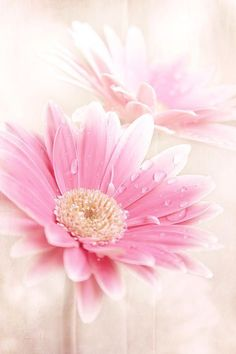 Imagem de flowers, pink, and nature