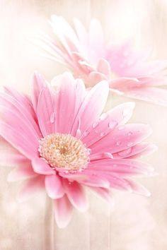 Imagem de flowers, pink, and nature