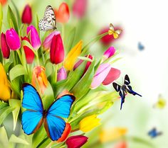 Mariposas y tulipanes coloridos | Colorful butterflies and tulips