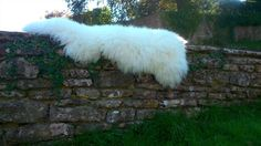Natural Dorset sheepskin