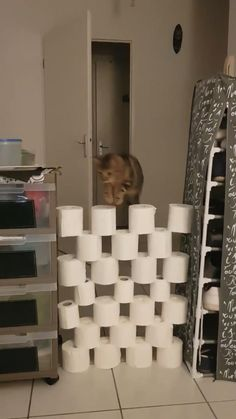 This explains all the toilet paper hoarding… - Funny animal pictures Animal Jokes, Funny Animal Memes, Funny Cat Videos, Funny Animal Pictures, Cat Memes, Cats Humor, Funny Dogs, Funny Horses, Dog Videos