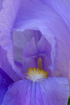 Iris with Diffuser by Scott Simmons Purple Love, All Things Purple, All Nature, Science And Nature, Outdoor Photography, Landscape Photography, Parts Of A Flower, Absolutely Gorgeous, Beautiful