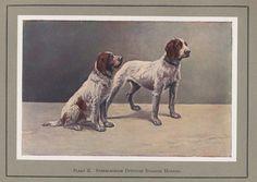 Más tamaños | onze honden ,plaat II | Flickr: ¡Intercambio de fotos!