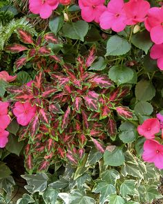 coleus and impatiens, would look awesome on the front porch