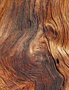 Sequoia bark detail, Little Yosemite Valley, Yosemite N. Faux Wood Wall, Metal Wall Art, Wood Art, Wood Walls, Textured Walls, Textured Background, Yosemite Sequoia, Yosemite Valley, Art Grunge