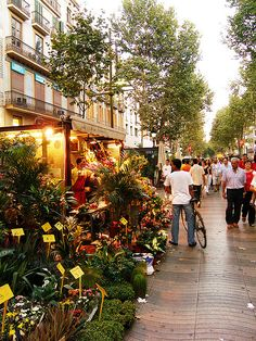 SPAIN.... Barcelona - La Rambla is a street in central Barcelona, popular with tourists and locals alike. A tree-lined pedestrian mall, it stretches for 1.2 kilometres.