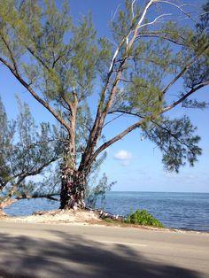 Flip Flop Tree, Grand Cayman Island