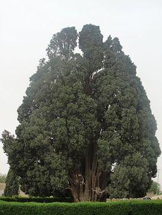Top 10 des arbres hors du commun dans le monde (c'est autre chose que ton ficus…