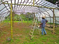 bamboo greenhouse - Pesquisa Google