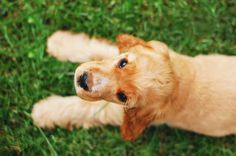 Free stock photo of adorable animal breed