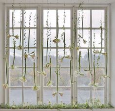 Flower strands hanging from the window