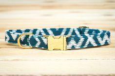 Teal Dog Collar, Turquoise, Metallic Gold, Male, Female, Autumn, Fall, Girl, boy, Metal Hardware