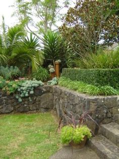 My home garden with volcanic rock walls built with rock from the property. Designed by Caroline Wesseling landscapes