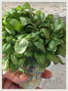 Basil - Basilico per il Laboratorio del #Pesto al Mortaio con Slow Food